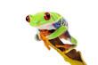 Frog on Banana