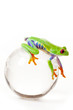 Green Frog on glass globe