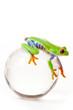 Green Frog on glass globe