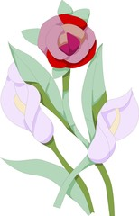 Vector model of flower, on white background