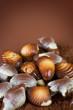 Swiss Chocolate Seashells border