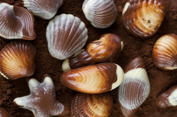 Chocolate Seashells and cocoa powder background