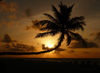 tramonto sulla spiaggia con palma