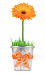 Flower gift in a pot