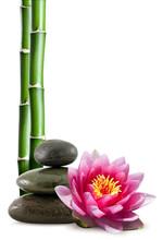 lotusblomma, bambu och småsten