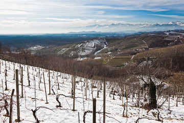 Snowed vineyards, Piemonte, north Italy