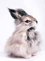 rabbit isolated on a white background, toy