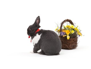 Easter bunny isolated on white
