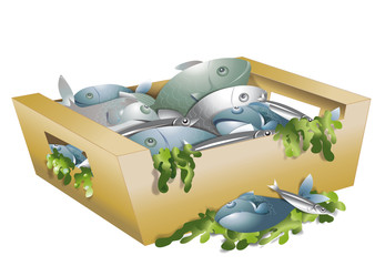 Caisse de poissons