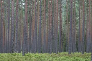 Norwegian woodland, Trogfjell