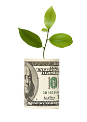 Tree growing from dollar