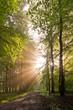 Fototapeten,licht,wald,sonne,sunlight
