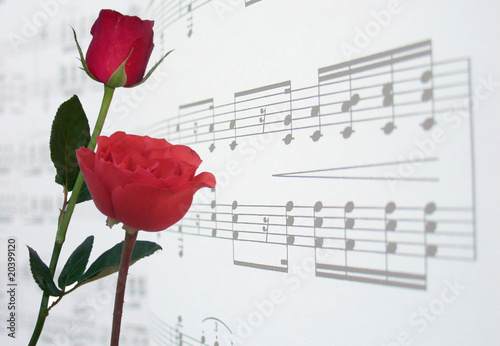 red roses and music