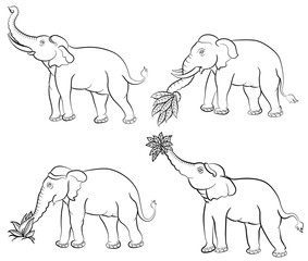 hand drawing elephant set