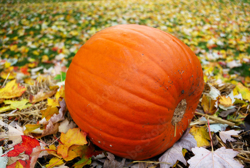 Big pumpkin on the green grass with autumn leaves