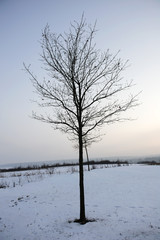 tree in winter land scape
