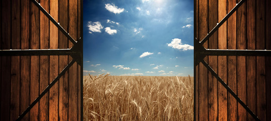 Doors to clouds over wheat field