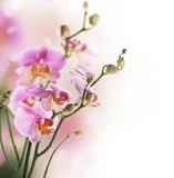 Beautiful Orchid border.Isolated on white.Selective focus