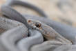 Постер, плакат: West Texas Snakes