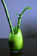 Lucky Bamboo in Green Glass Vase