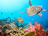 Butterflyfishes i żółw