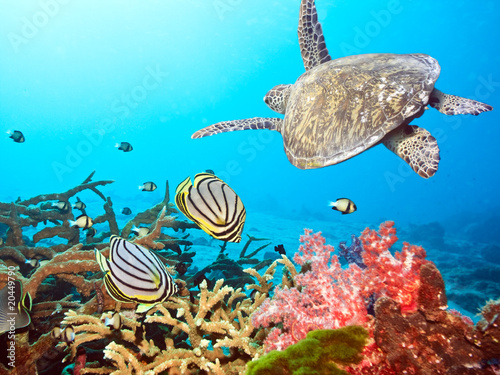 Fotobehang Schildpad Butterflyfishes and turtle