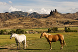 Two horses on the ranch in rural Wyoming poster