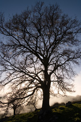 Bare Tree At The Twilight