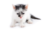 black and white kitten mewing poster