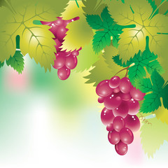background with a bunch of grapes and grape leaves