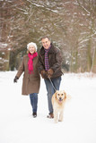 Fototapety Senior Couple Walking Dog Through Snowy Woodland