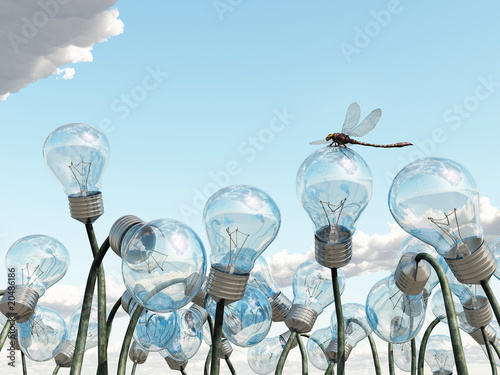light bulb field