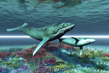 Fototapete Sperma - Küh - Meeressäuger