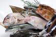 魚、食材 - 20489914