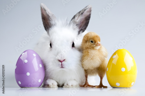 Bunny and chick - 20512589