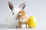 Happy Easter animal