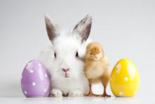 "Постер, картина, фотообои ""Easter bunny on chick white background"""
