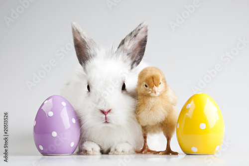 Fotobehang Kip Easter bunny on chick white background