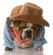dog dressed up as a cowboy