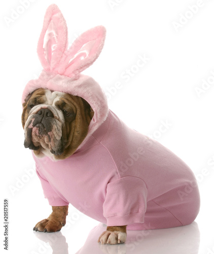 dog dressed up as easter bunny - 20517559