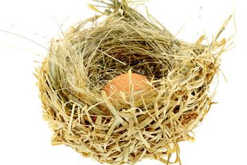 oeuf, nid de paille, fond blanc