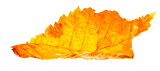 autumn wilting leaf poster