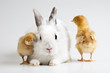 Bunny on chick white background