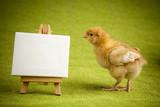 Fototapety Cute little chick, frame