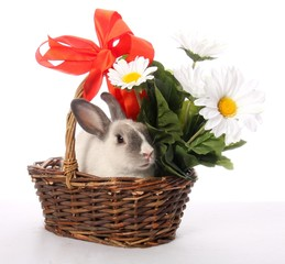 Bunny Rabbit in Wicker Basket
