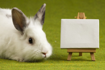 Bunny on table, frame