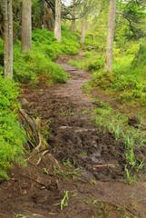 Piller Moor - Piller Swamp 06