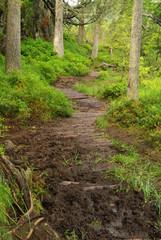 Piller Moor - Piller Swamp 07
