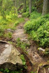 Piller Moor - Piller Swamp 09