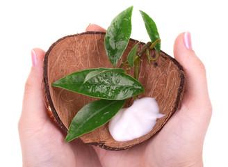 Hand cream in coconut shell
